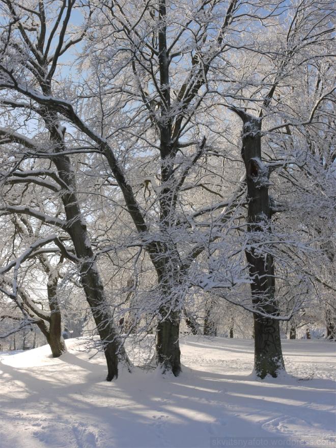 Januarisnö 1.jpg